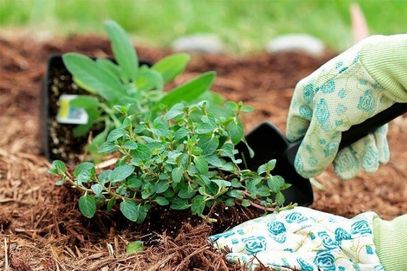 garden plants care